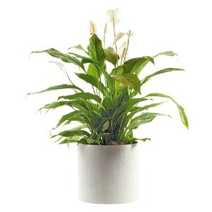 Regionsflorist blumenversand orchideen blumen for Pflanzen bestellen berlin